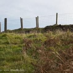 fence posts