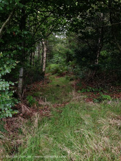 Forest footpath in August