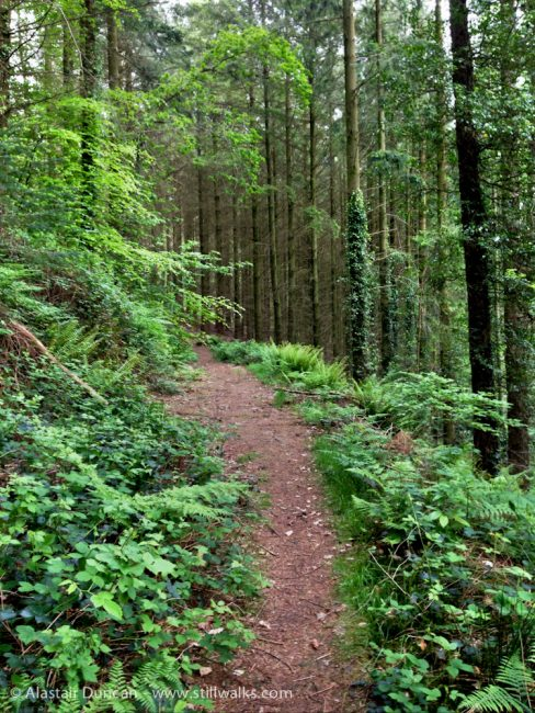 Forest footpath in May