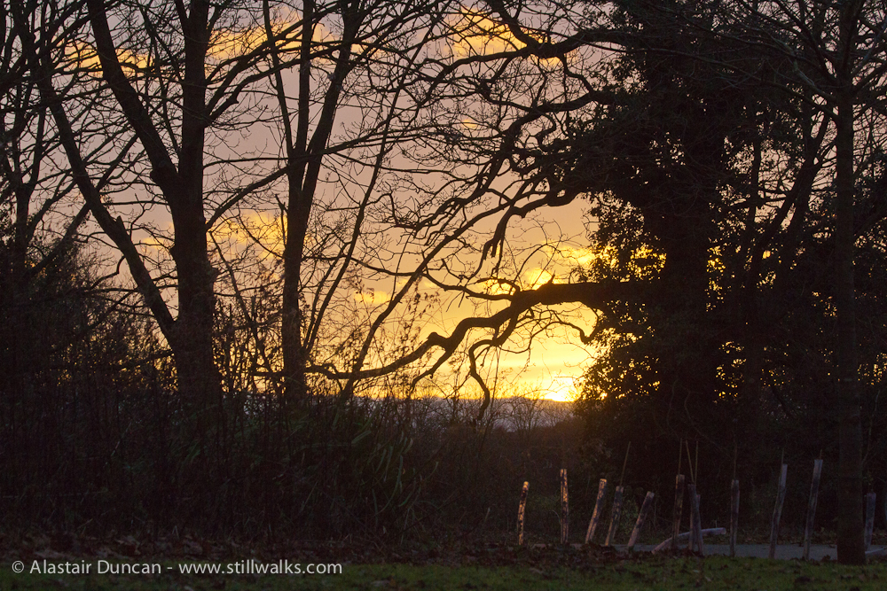sunset and tree silhouettes