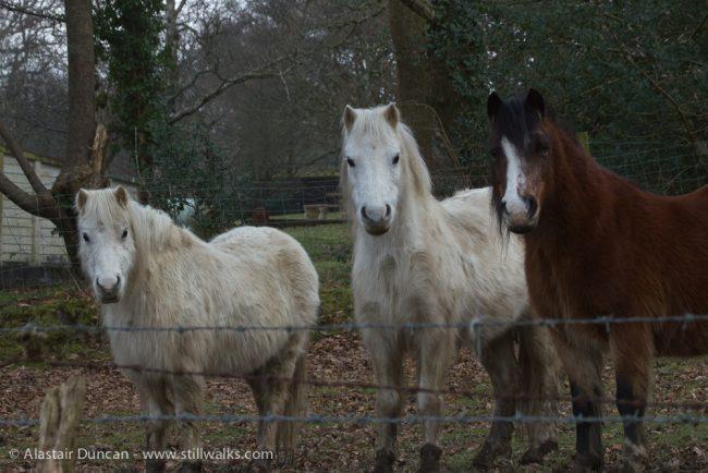 Valley Ponies