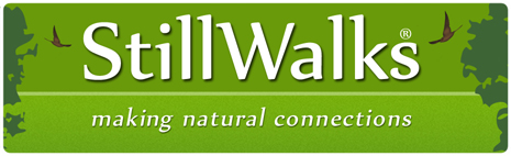 StillWalks Logo