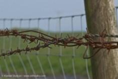rusty fencing