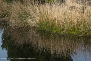 Grass Reflections 2