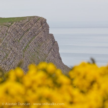 cliff and whin yellow