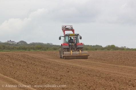 Corn crop rollering
