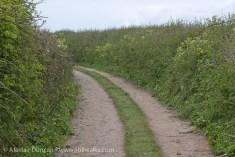 Rhossili country lane