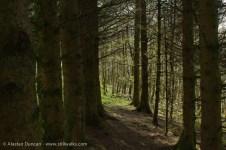 Woodland passage