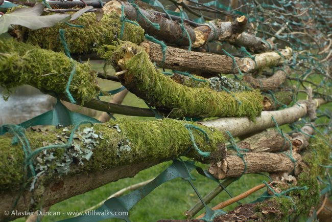 mossy sticks