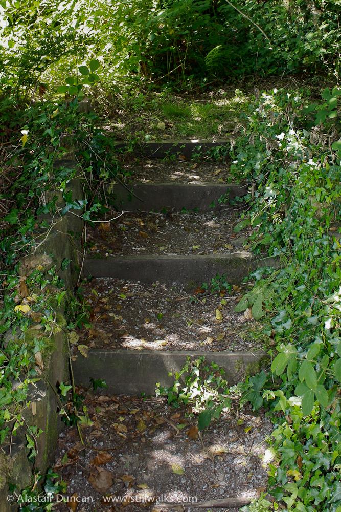 Forest footsteps