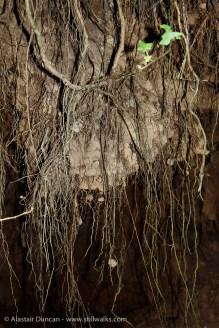 tree root tendrils