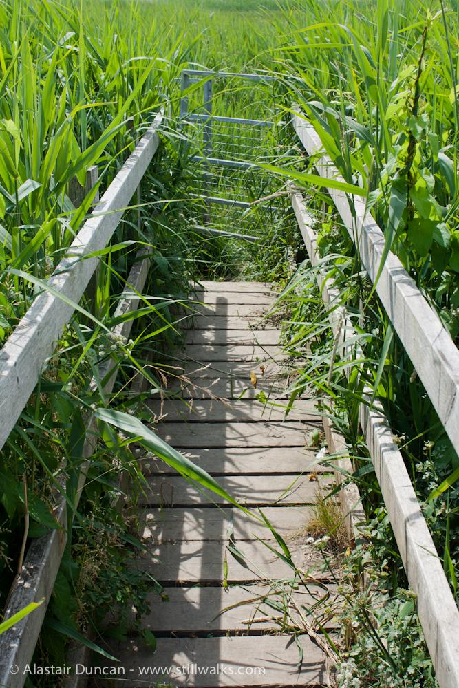 footbridge growth