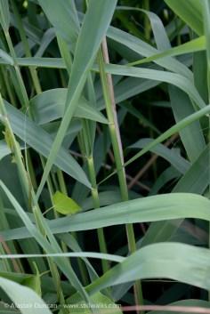 marsh grass patterns