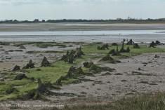 Ancient tree stumps - Pagham