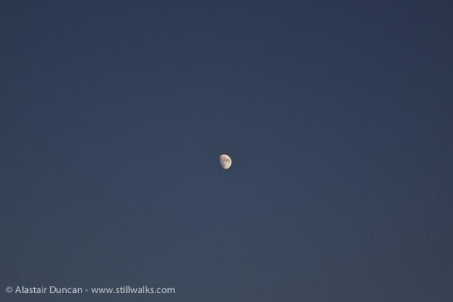 evening moon