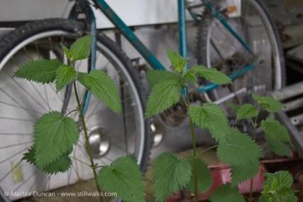 old bike in nettles