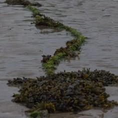 seaweed tether