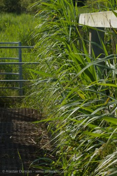 footbridge marsh grasses