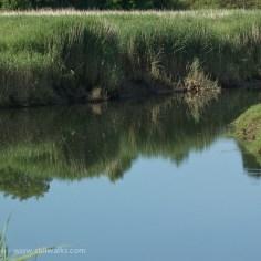 River Loughor