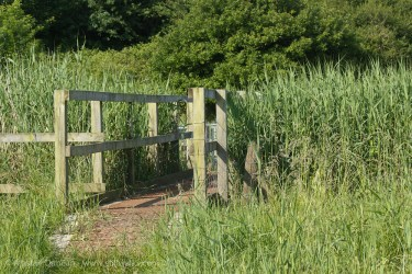 Marsh footbridge