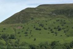 Mynydd Troed tree patterns