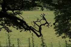 crooked branch silhouette