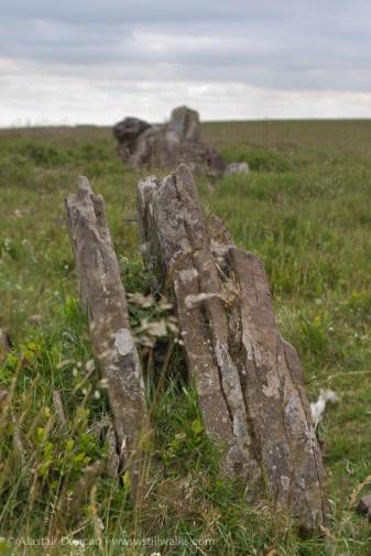 Llangorse stones
