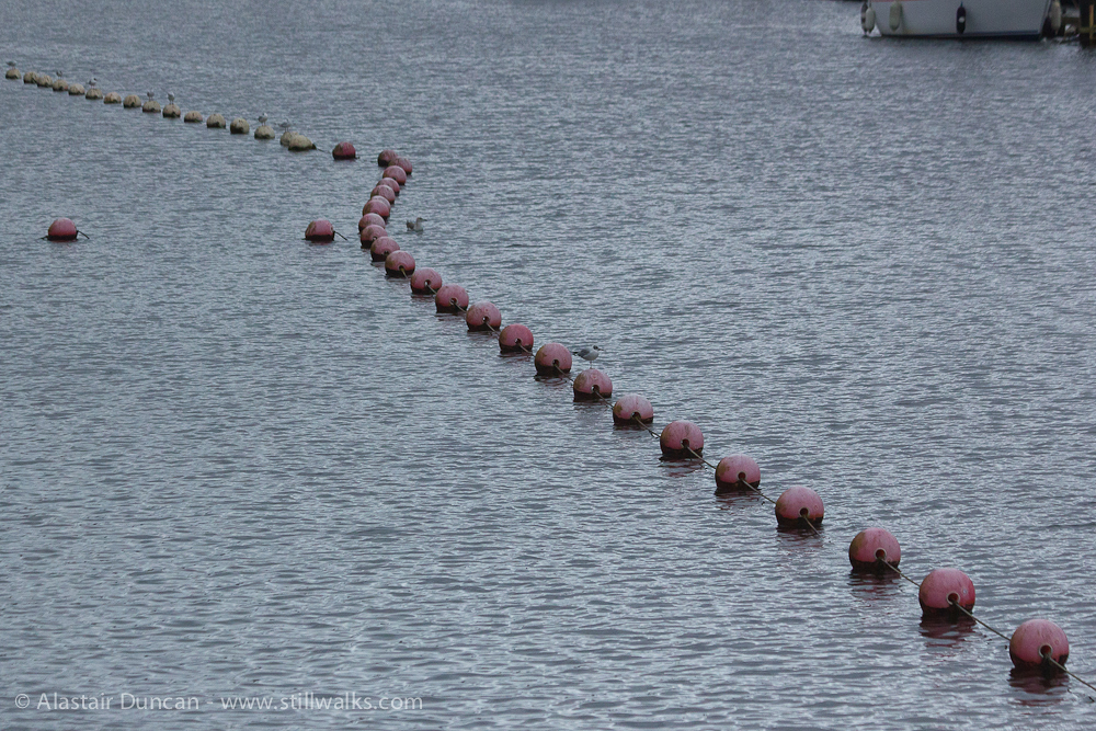 marina floats