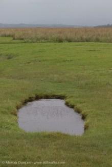 Marsh puddle