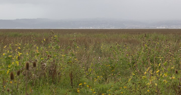 open marshes