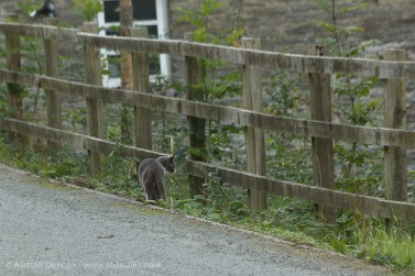 farm cat and fence
