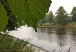 dripping leaf