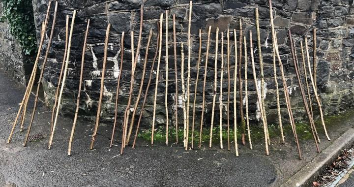 Ash walking staffs