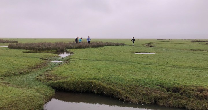 Across the marshes
