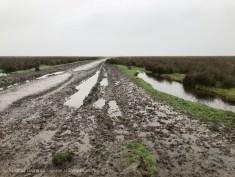 muddy marsh track