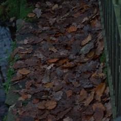 Dark Park 18 - leaves
