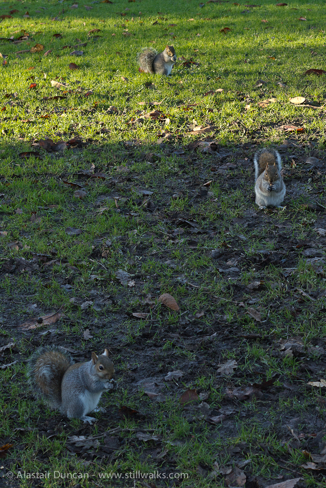 Gathering squirrels