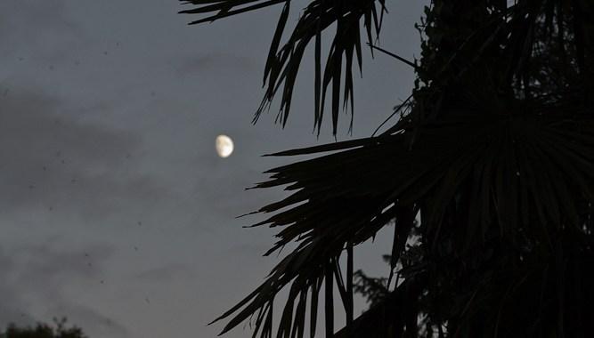 Dark Park 21 - Moon