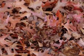 Stratford Park Autumn Leaves