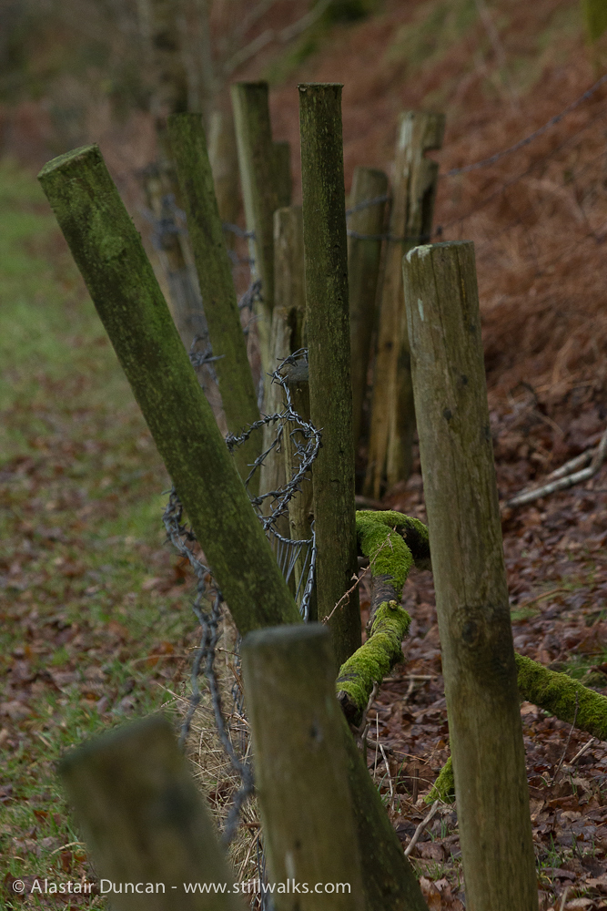 February - The Waterside fence