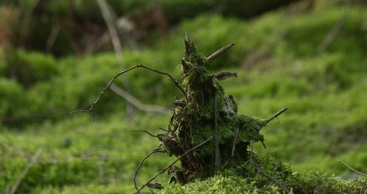 April - Woodland