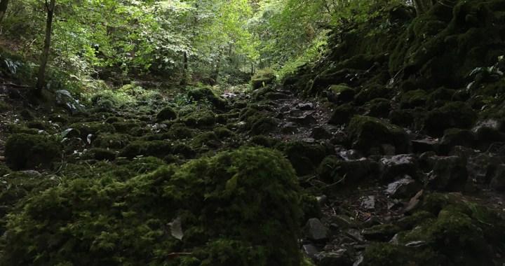 September - Bishopston Valley