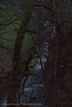Woodland and cascade