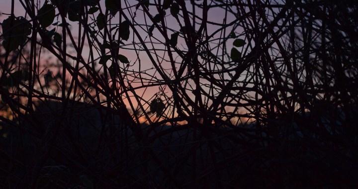 Pre-dawn silhouette