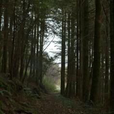 Woodland Way