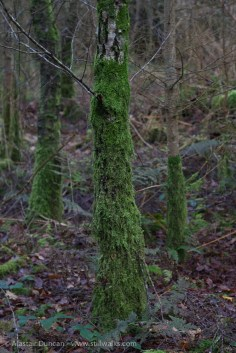 mossy chaps