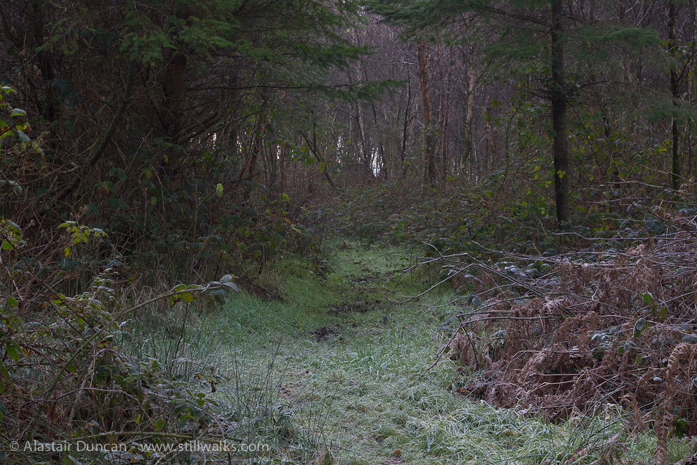 frosty footpath 2