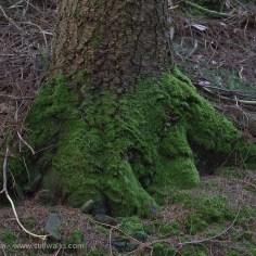 Skirt of moss