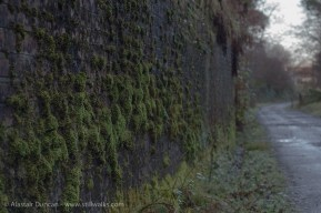 Heavy moss wall