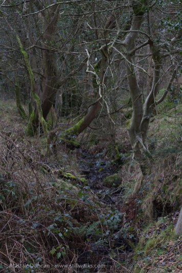 Woodland stream or ditch